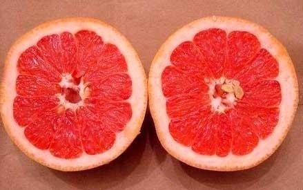 Dulceata de grapefruit2.jpg