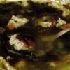 Bors de salata cu kaizer afumat