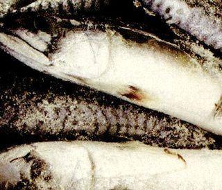 Marinata de macrou cu boabe de piper si ceapa