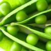 Pateu de mazăre verde