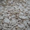 Retete de post: Salată de ciuperci cu sfeclă şi usturoi