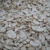 Supă de ciuperci (Pitarcă)