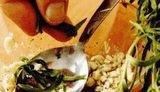 Frigarui din soia