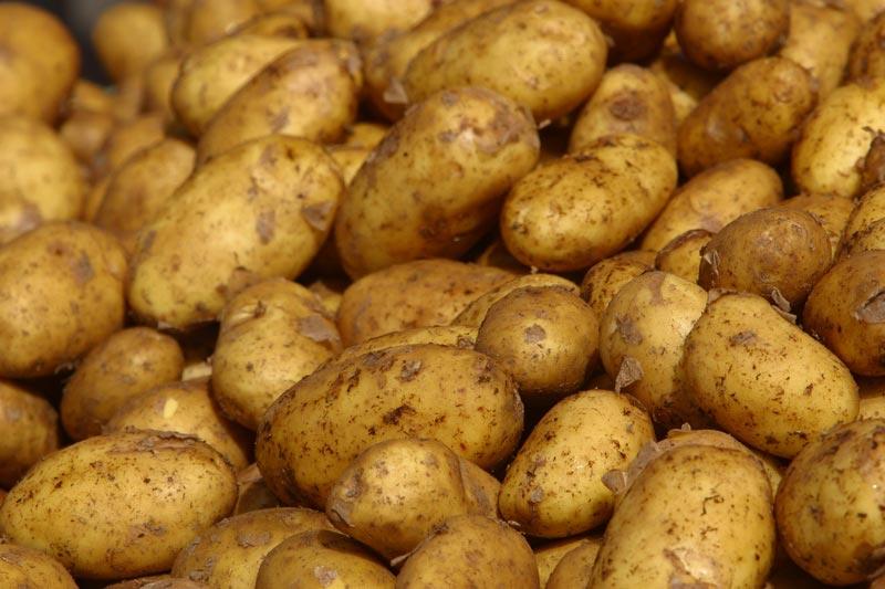 Cartofi evantai