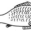 Ciorbă ţărănească, de peşte sărat