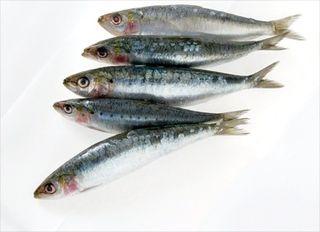 Rulouri de sardine marinate