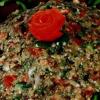 Salata_libaneza_de_vinete.png