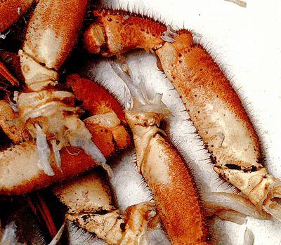 Crabi cu sos cu miere si unt