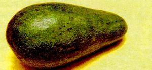 Avocado_-fierbinte.png