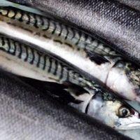 Gustare cu sardine