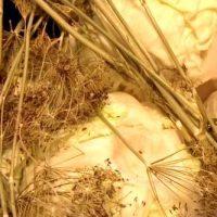 Salata de varza murata cu usturoi