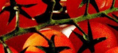 Fructe si legume uscate