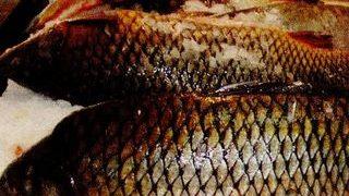 Mancare de peşte cu branză la cuptor