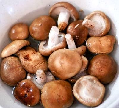 Ciuperci gatite taraneste