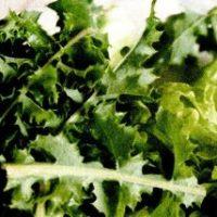 Salată de păpădie Transilvania