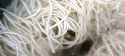 Noodles cu muguri de fasole